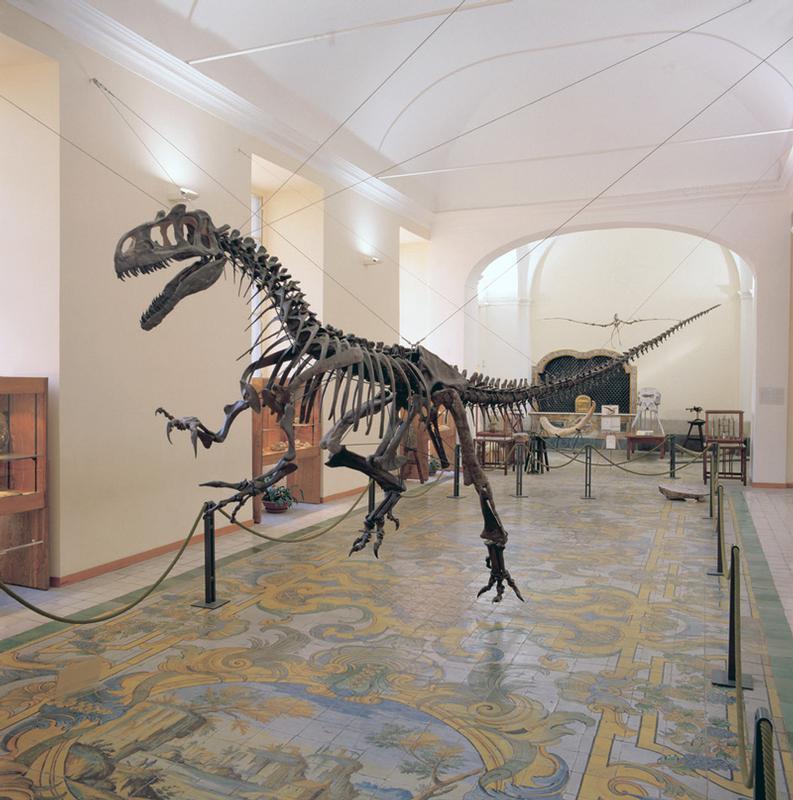 Centro-Musei-delle-Scienze-Naturali-e-Fisiche-1
